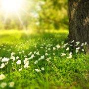 Liste de vocabulaire en anglais sur la nature