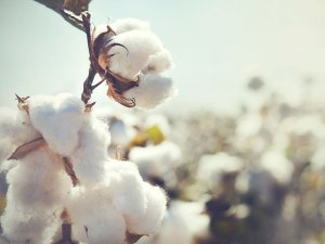 FROM only uses certified organic cotton