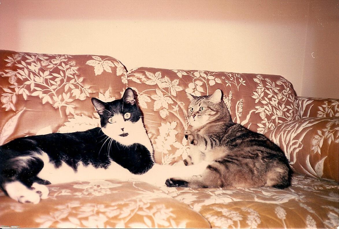 Barney & Fluffy - Christmas-Time 1988