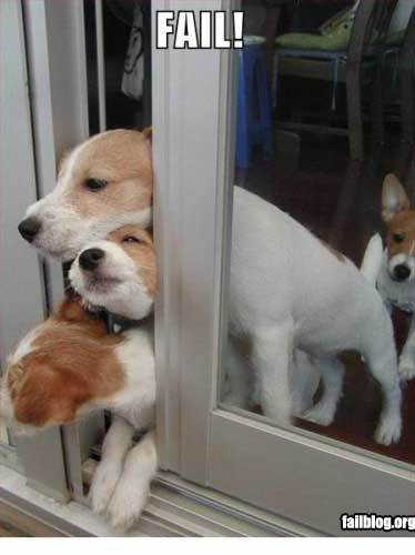 dogs-stuck-in-door1