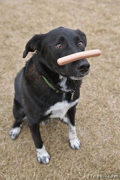 Dog Vs Hot Dog