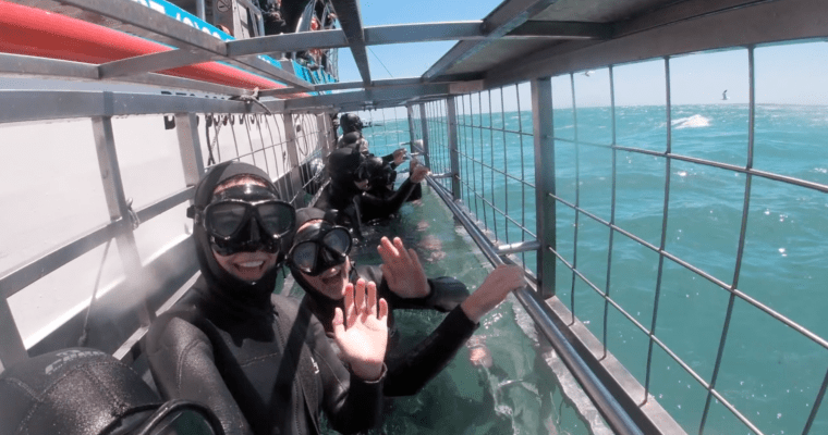 Cage Diving in Cape Town | South Africa