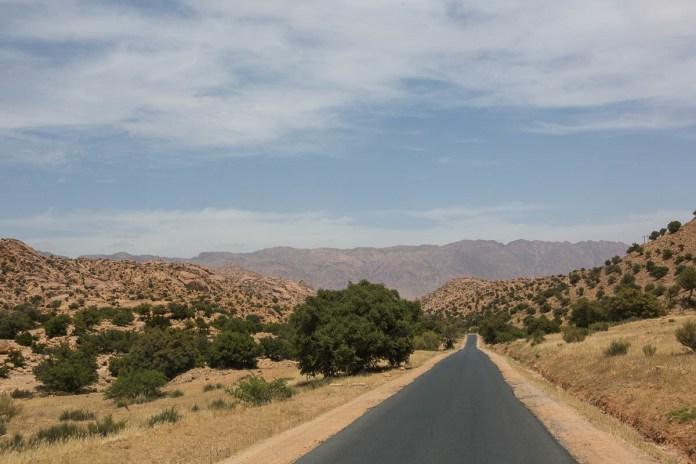 Arganen oder Arganienbäume säumen die Straße nach Tafraoute und wurden so weit das Auge reicht kultiviert