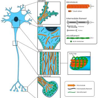 treatment-for-peripheral-neuropathy