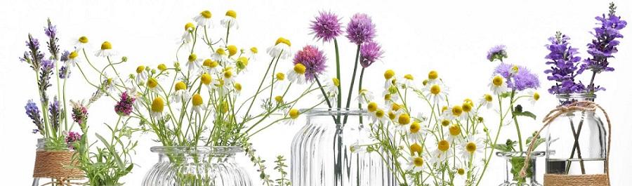 herb-to-balance-hormones