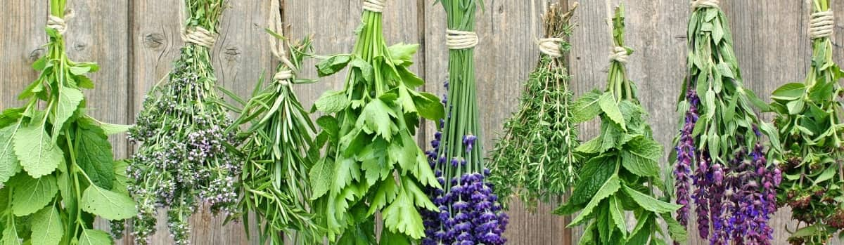 herbs-to-treat-optic-neuritis