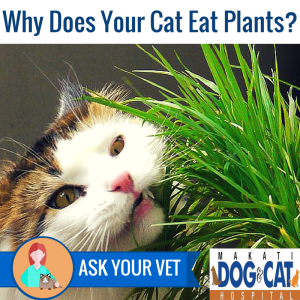 Why Does Your Cat Eat Plants?