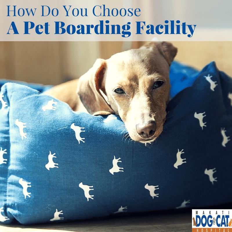 How Do You Choose A Pet Boarding Facility?