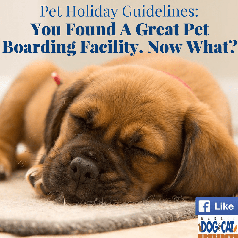You Found a Great Pet Boarding Facility. Now What?