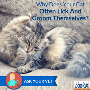 Why Does Your Cat Often Lick And Groom Themselves?