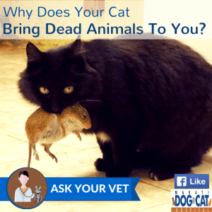 Why Does Your Cat Bring Dead Animals To You?