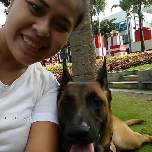 Billy: Belgian Malinois