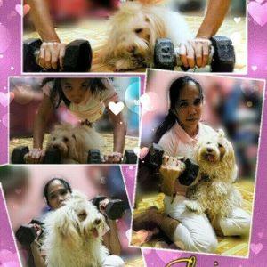 Elouis: Shih x Poodle