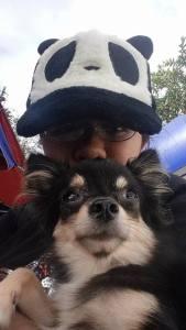 Happy: Chihuahua