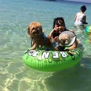 Sabrina and Clark: Shihtzu x Poodle and Shihtzu
