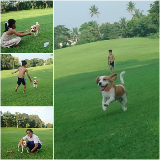 Zingko: Beagle