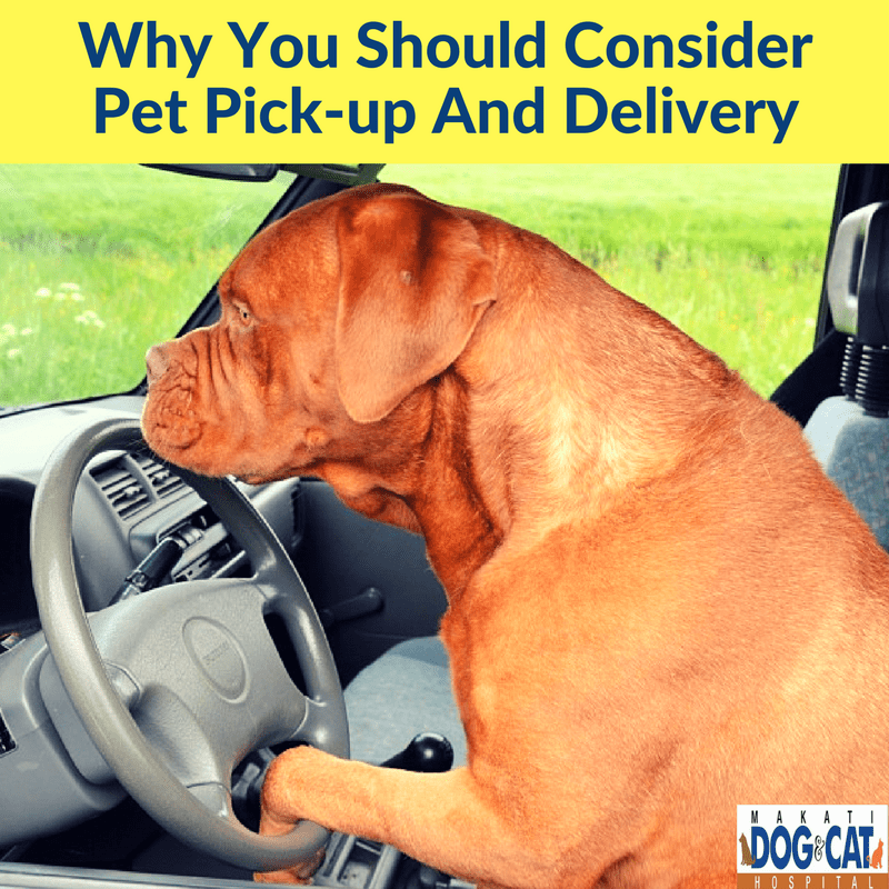 Why You Should Consider Pet Pick-up And Delivery
