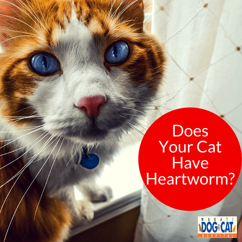 Cat Heartworm: Does Your Cat Have Heartworm?
