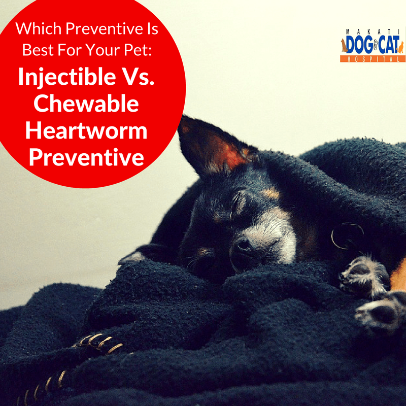 Which Preventive Is Best For Your Pet: Injectible Vs. Chewable Heartworm Preventive