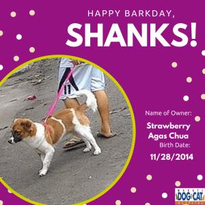 Happy Birthday, Shanks!