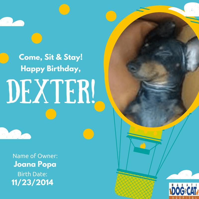 Happy Birthday, Dexter!
