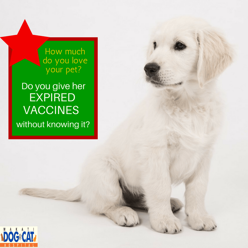 Expired Pet Vaccines Philippines: What You Need To Know – Part 1
