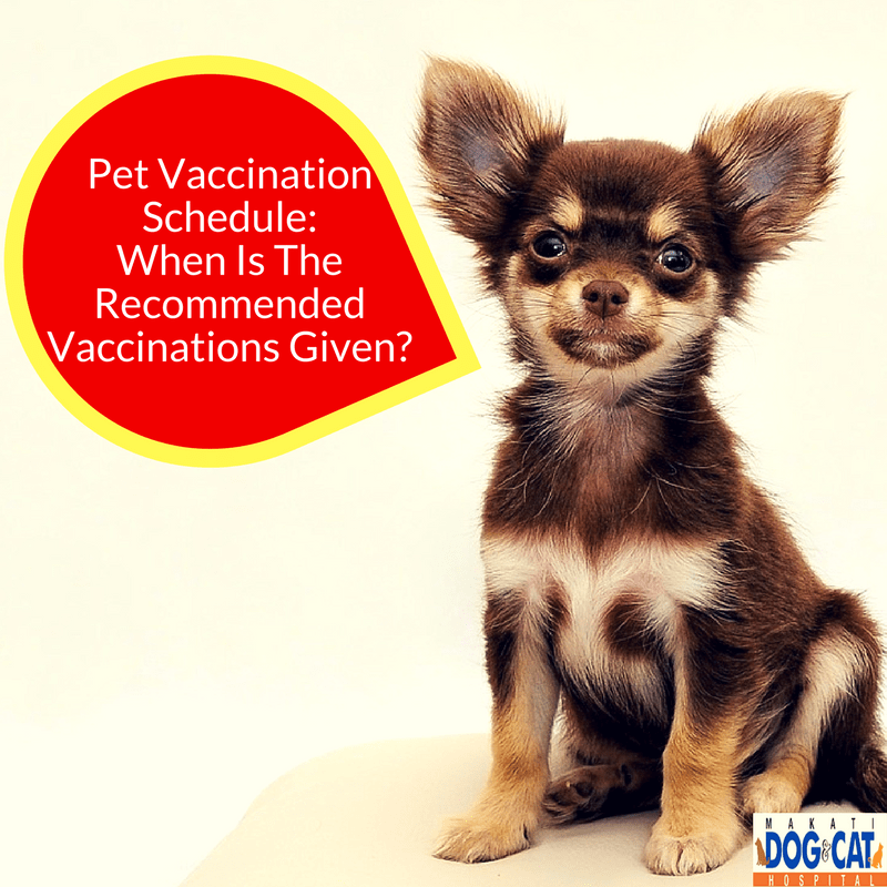 Pet Vaccination Schedule When Is The Recommended Vaccinations Given