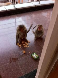 Monkeys in class
