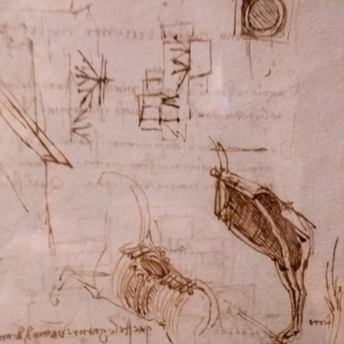 Leonardo daVinci Ten Drawing Exhibition at Nottingham Castle