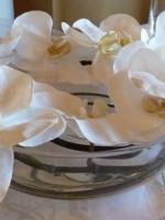 White Phaleanopsis Orchids