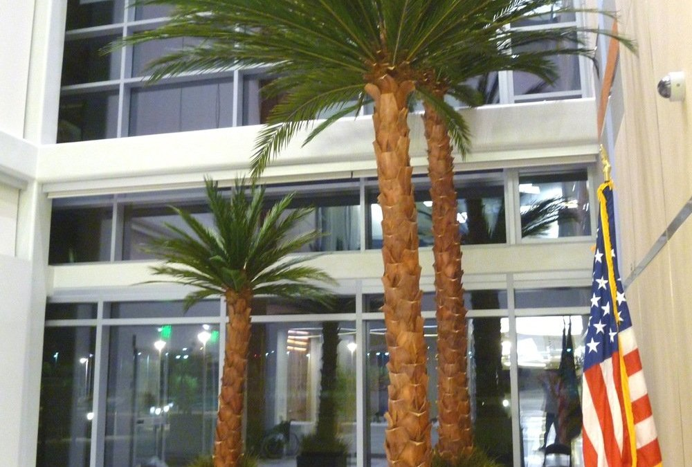 Preserved palm from our North Las Vegas GSA project.