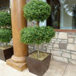 An example of our double layer boxwood topiary.