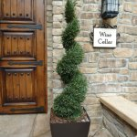 An example of our Rosemary Spiral Topiary. (Click yo