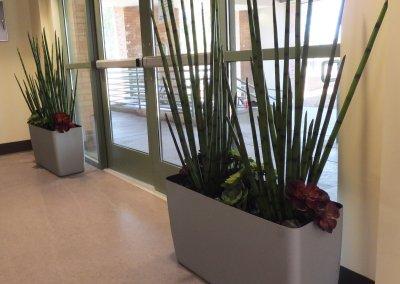 Also inside of the VA Greater Los Angeles, Sepulveda Ambulatory Care Center, we paired Snake plants with Echeverias either side of the entry.