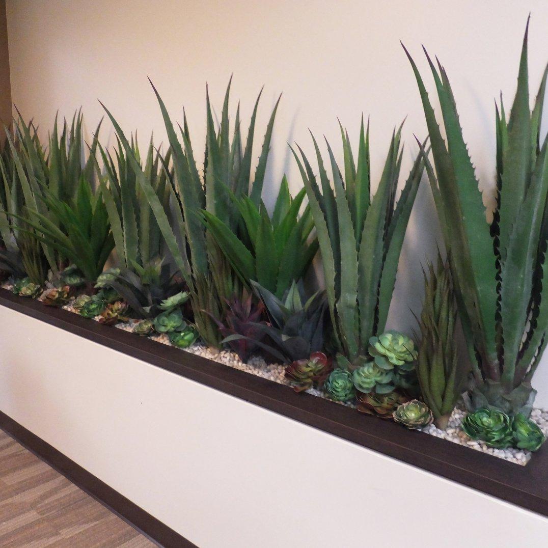 mixed_succulents_planting