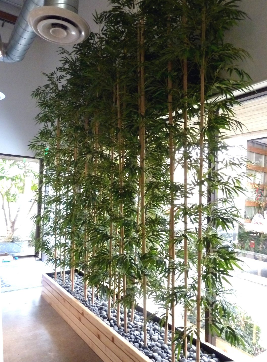 12 ft Bamboo Planting