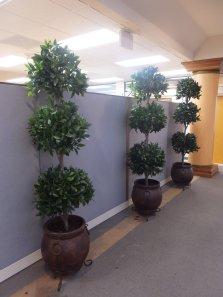 Triple Bay- Leaf Topiary