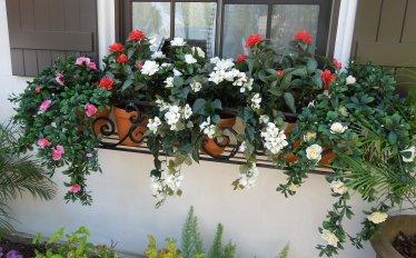 uv flowering plants