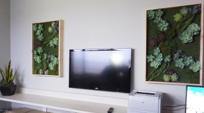 succulent-wall-art2