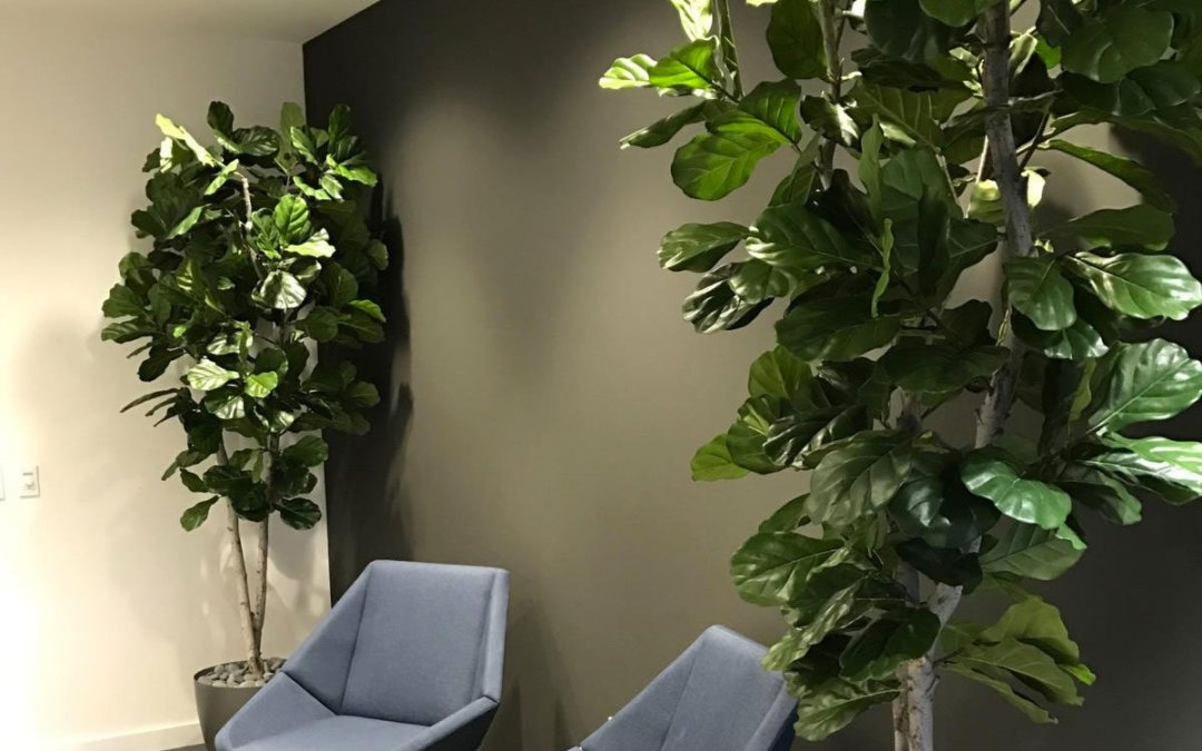 Artificial Floor Plants & Trees for Skechers and Wagstaff corporate offices