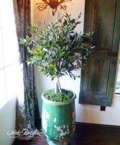 4ft-Mediterranean-Olive-Tree