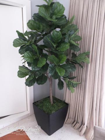 6ft-Fiddle-Leaf-Single-trunk