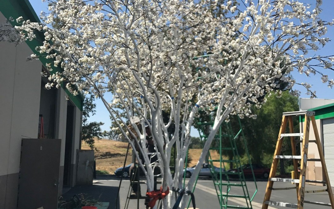 Our Largest Silk Pink Cherry Blossom Tree Is Over 14 feet!