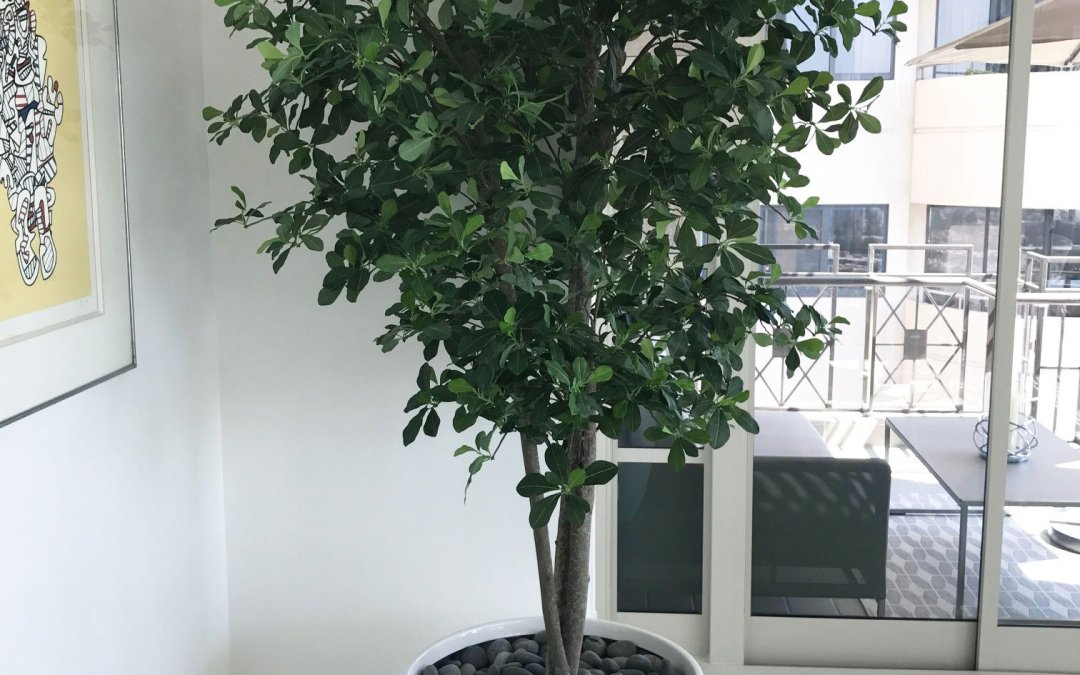 Artificial OLIVE Trees In Custom Containers