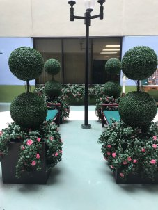 Artificial azaleas in planters, Faux UV Topiaries