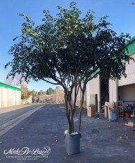 14ft-artificial-camellia-tree