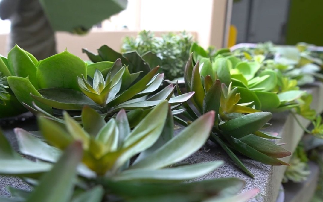 Artificial Mixed Succulent Plantings; no-maintenance life-like plants for cafeteria