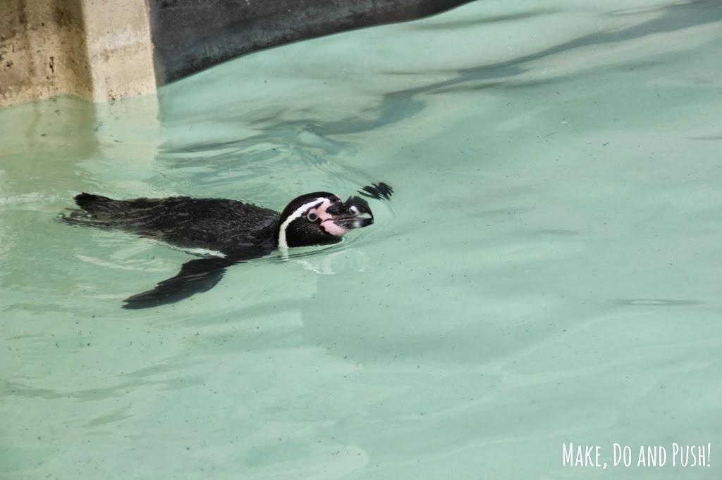 Drusillas-penguin