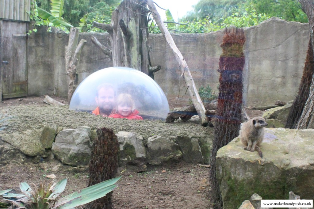 drusillas park review meerkat tunnel