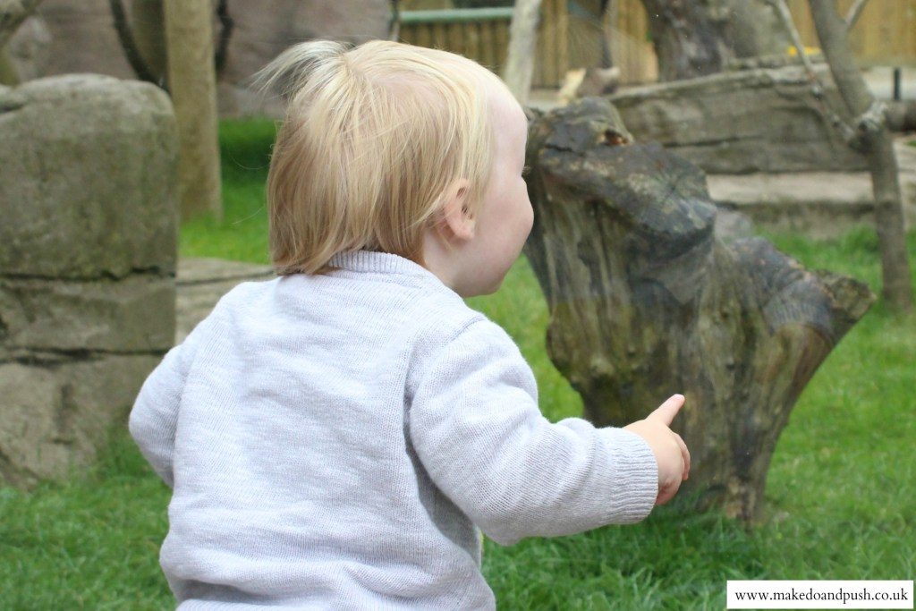 drusillas park review excited baby